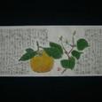 どくだみと夏蜜柑図 6/13