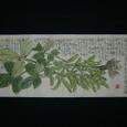 枝豆図 7/3