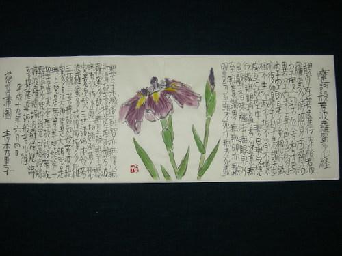 花菖蒲図 6/4